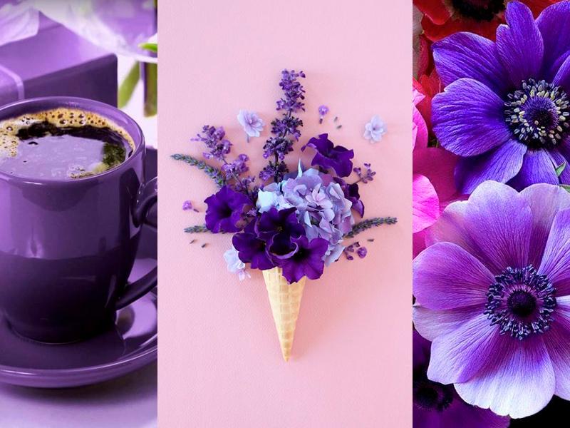 Ultra_Violet_BlogPedrazzini